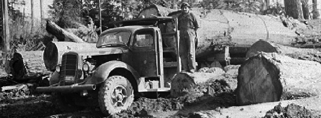 1946 Forestry