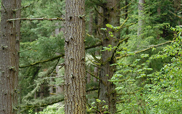 Oregon Timber & Conservation Agreement