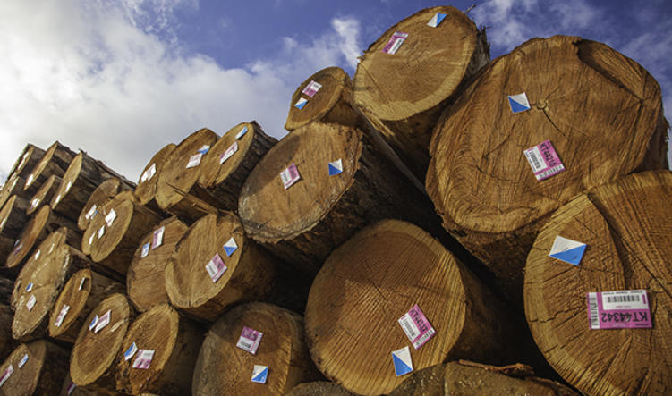 Us Forestry Products