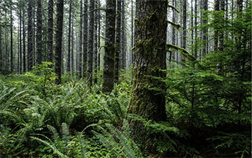 Our forest stewardship in Oregon